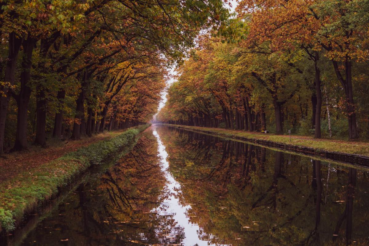 Herfst, van landschap tot paddenstoel.