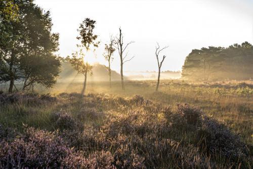 Neterselse Heide in de vroege ochtend