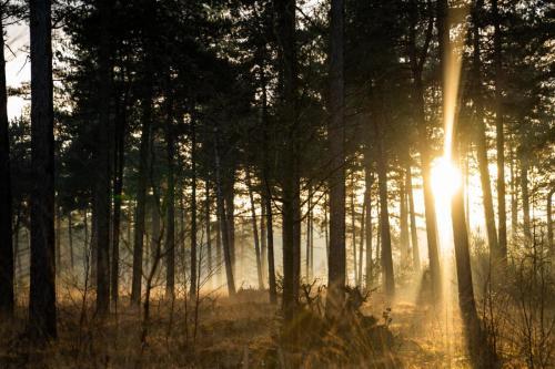 zonneschijn door bomen
